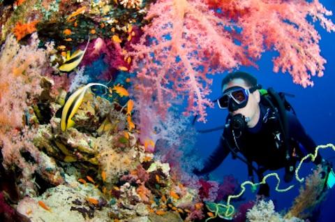 Tour scuba diving