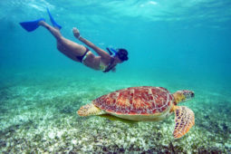 swimming-with-turtles-in-akumal